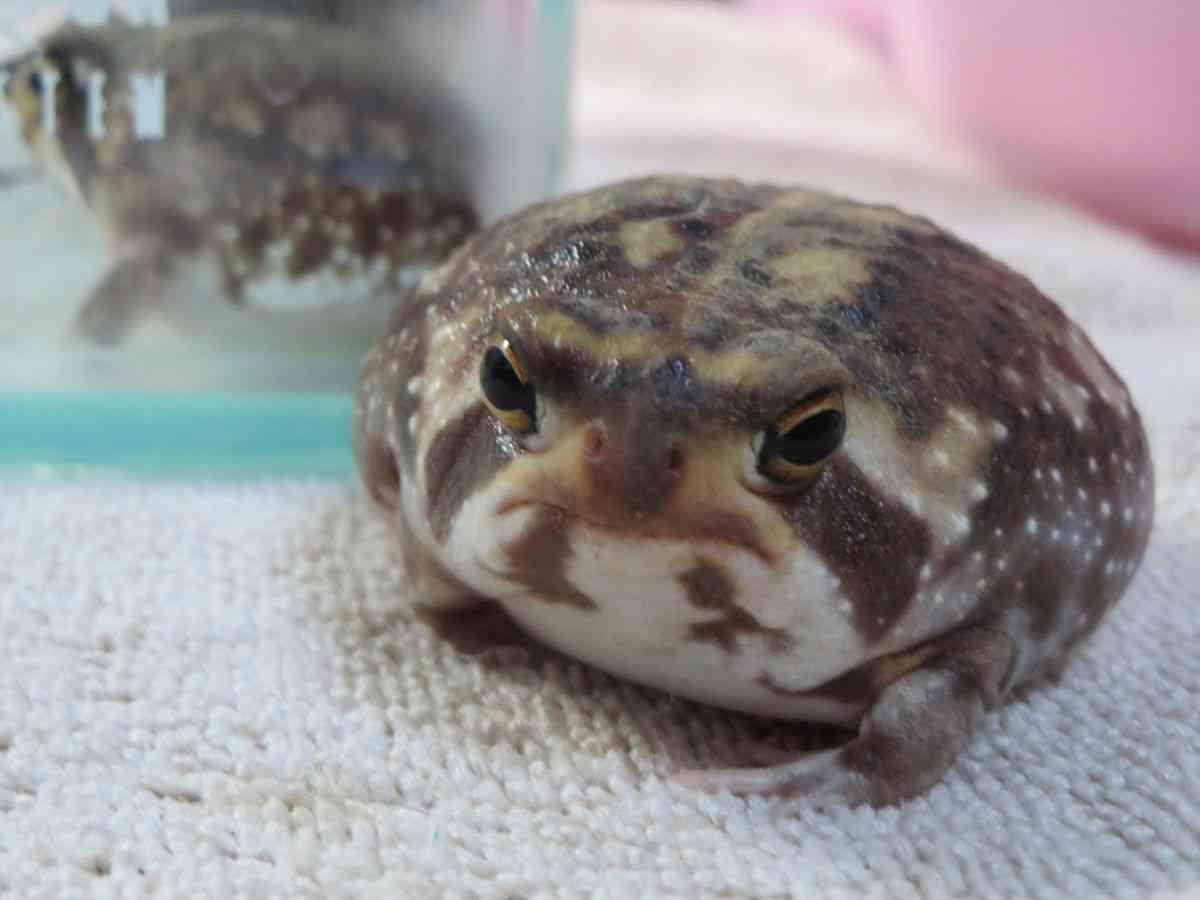 カエルが好きな人集まりましょう!