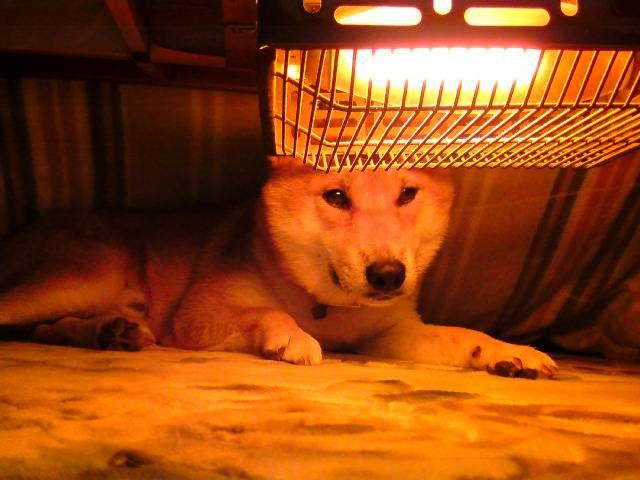 凍死寸前になるケースも…獣医師がペットの冬の外飼いに警鐘「室内に入れて」