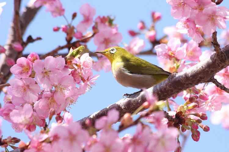 春が待ち遠しい方ー!