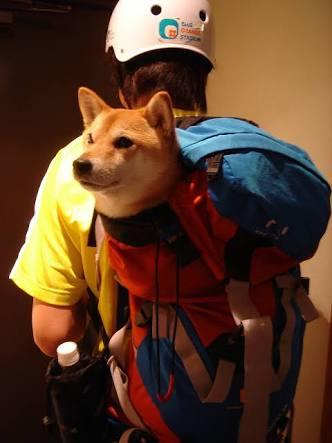 動けなくなくなった飼い犬を山に置き去りにし死なせた登山者に非難殺到(英)