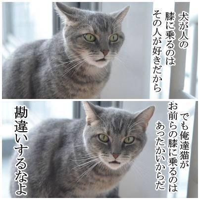 甘えん坊な猫を飼っている方