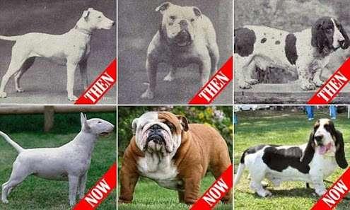 品種改良された犬や猫についてどう思いますか?