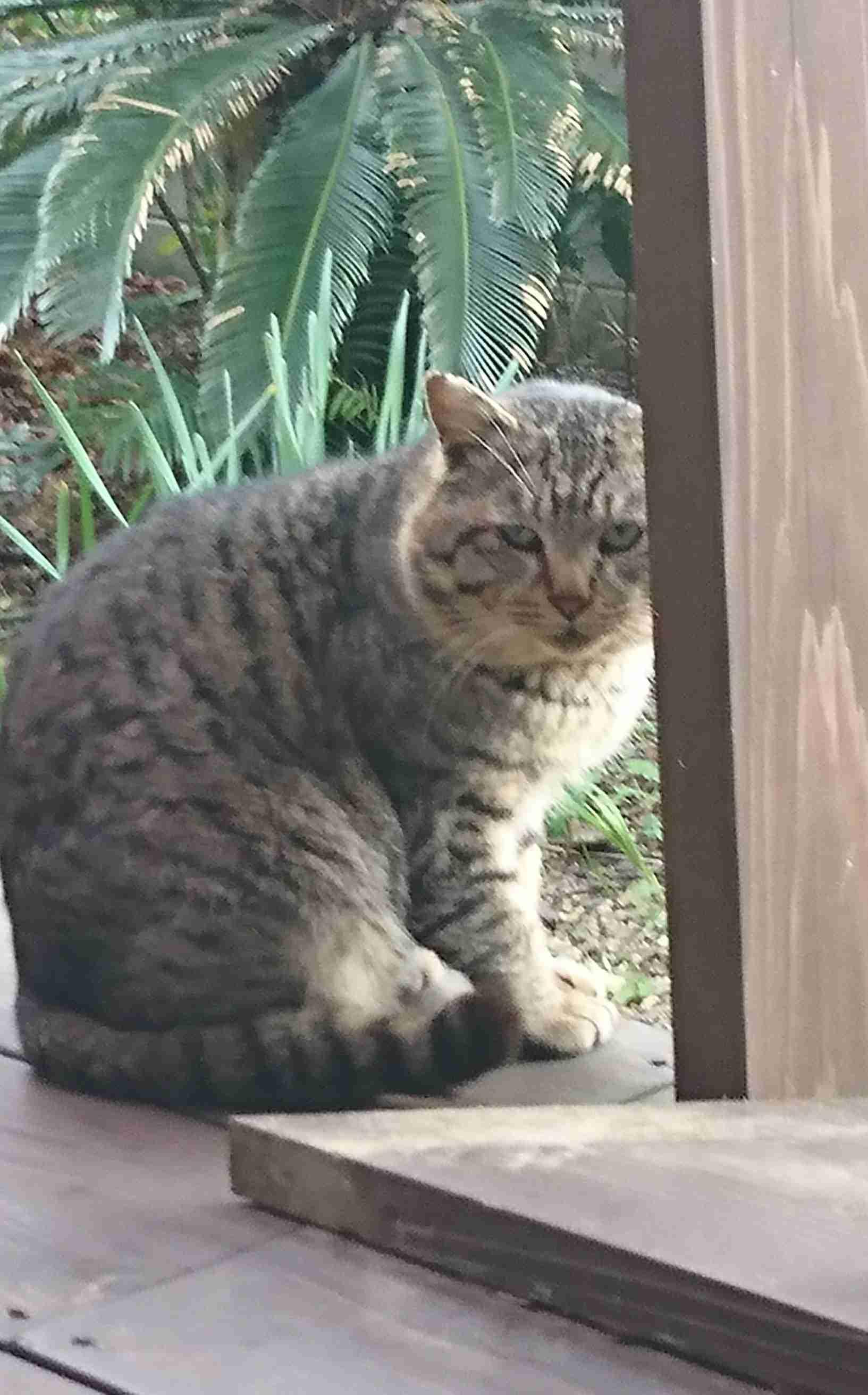 (身バレしない程度に)お宅の猫ちゃん見せてください!