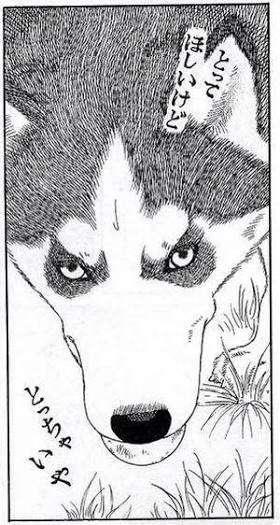 漫画「動物のお医者さん」好きな人