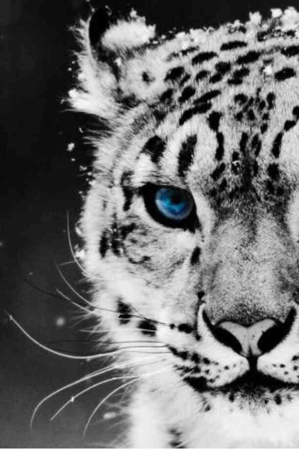 美しい生き物の画像