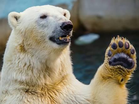 クマを隠せるコンシーラー