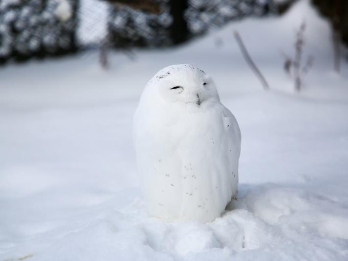 寒い地域に住む動物達の画像