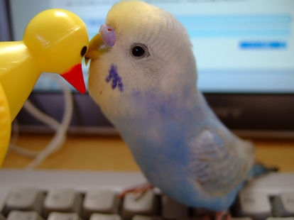 【酉年最後】色んな鳥が見たい