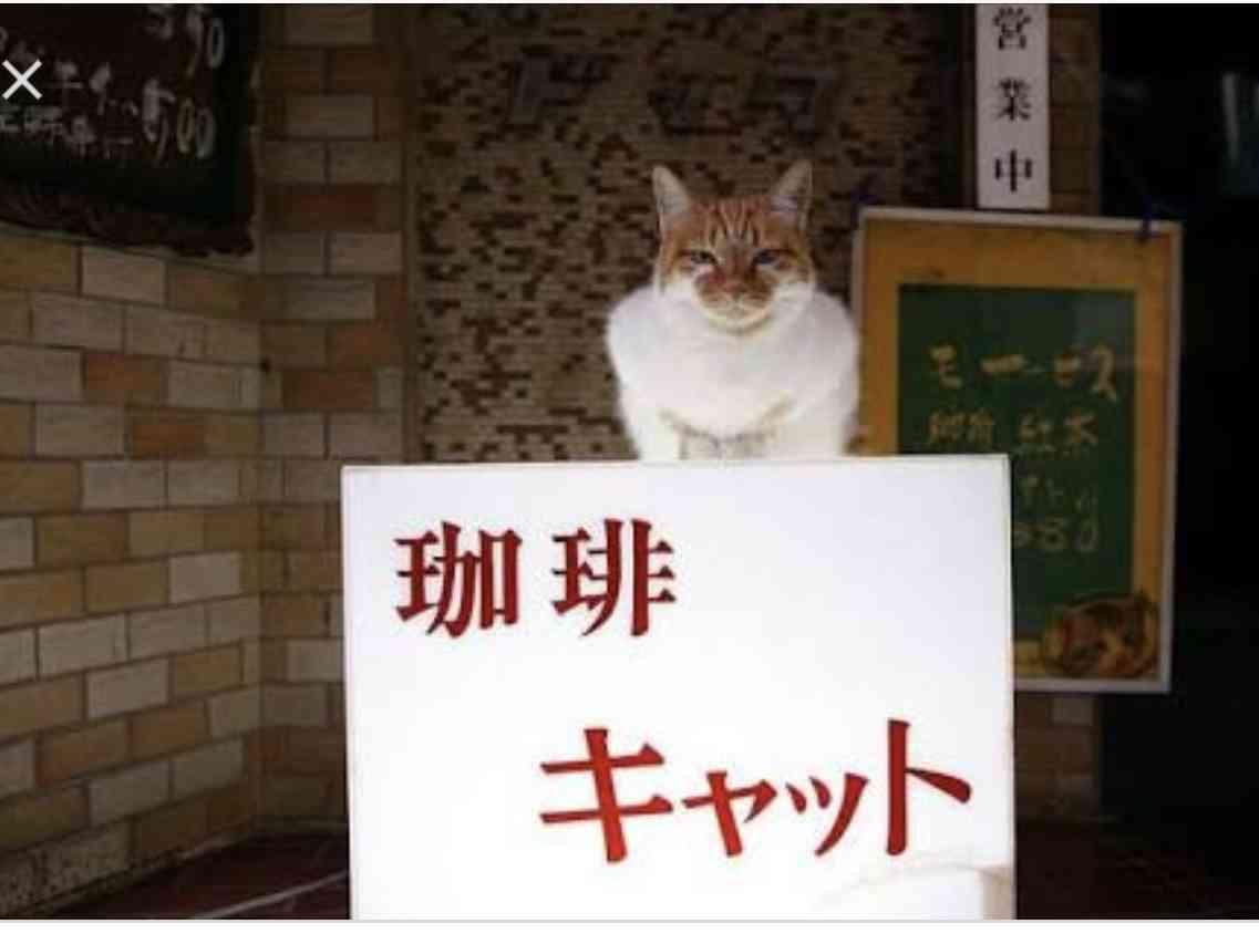 ガルちゃん猫カフェ23号店 開店しました♪ (初めての方も大歓迎!)