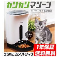 【時間】猫の朝ごはん【行動】