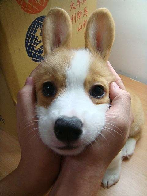 【画像】うさぎを愛でるトピ