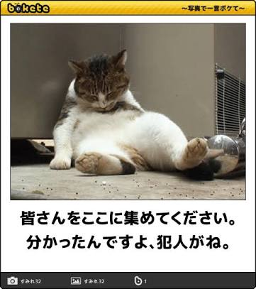 猫のボケて(bokete)画像