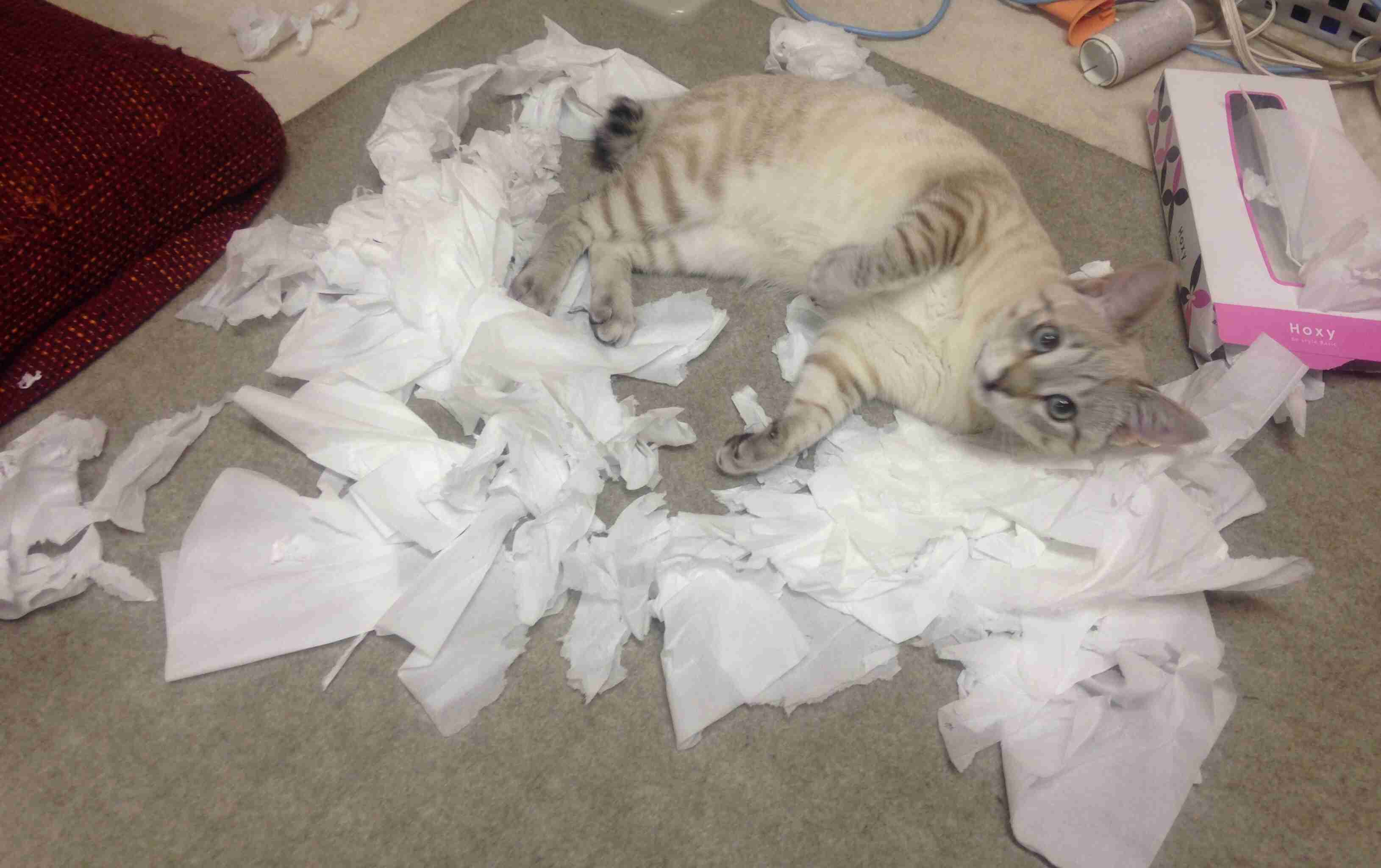 あなたの飼い猫がやらかしちゃったこと
