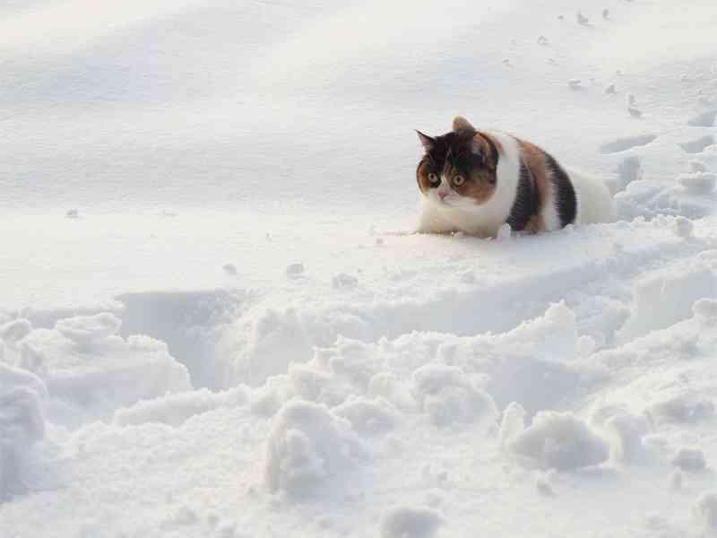 冬太りはOK!冬に老けない2つのコツを、高須院長に習った