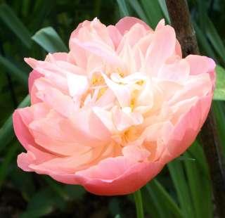 【がるちゃん花畑】好きな花の画像を貼ろう