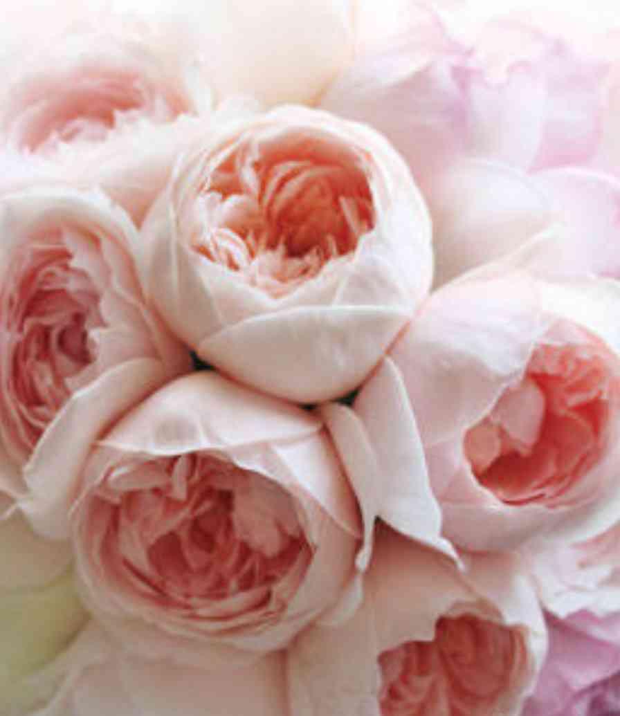あなたが一番好きな花!
