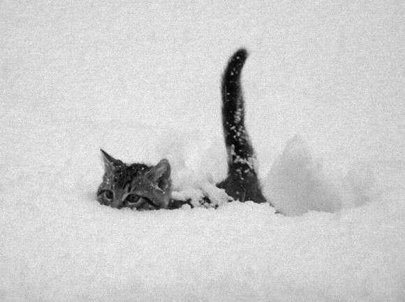 北陸大雪 まだまだ復旧せず。励まし合おう!