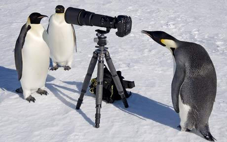 くちばしに付いたシャボン玉が離れないペンギンがかわいいw
