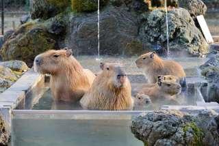 今シーズン何処の温泉行きましたか?又は行きますか?