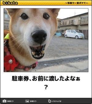 犬のボケて(bokete)画像を貼るトピ