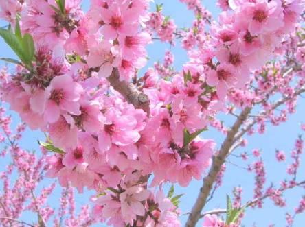 春が待ち遠しくなる曲