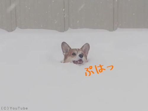 雪国育ちに聞きたいこと