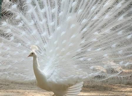 ど派手な鳥類観察の会!