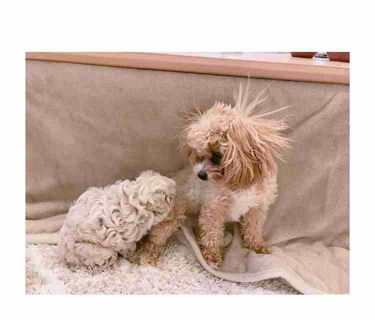 辻希美、12月に産まれた子犬が1か月間以上ブログにアップされない怪現象