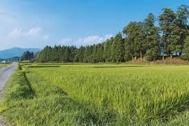田舎の画像で癒されるトピ