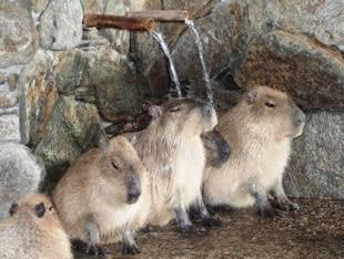 動物の画像で会話をするトピ