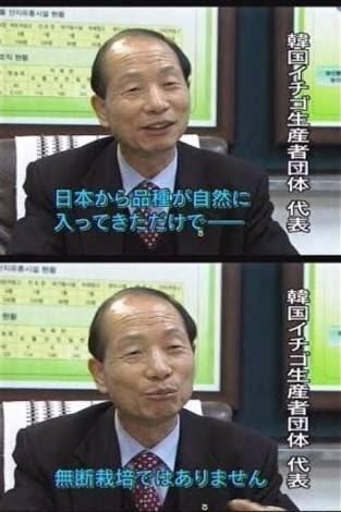 カーリング女子「韓国産イチゴ」大絶賛の陰で日本農家の複雑すぎる思い