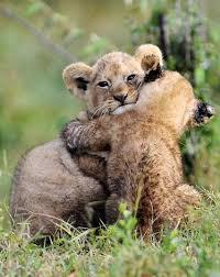 抱きしめられている画像ください。