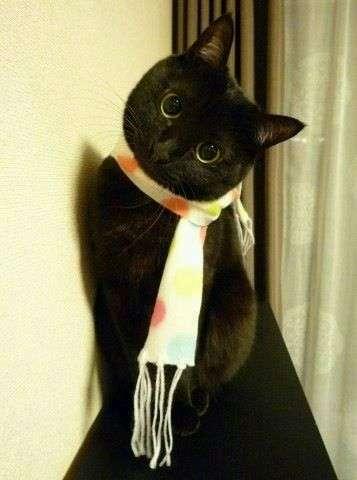 「自撮りで映えない」 黒猫ばかりが捨てられる理由に保護センターも嘆く(英)
