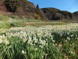 【国内】春にオススメの旅行先