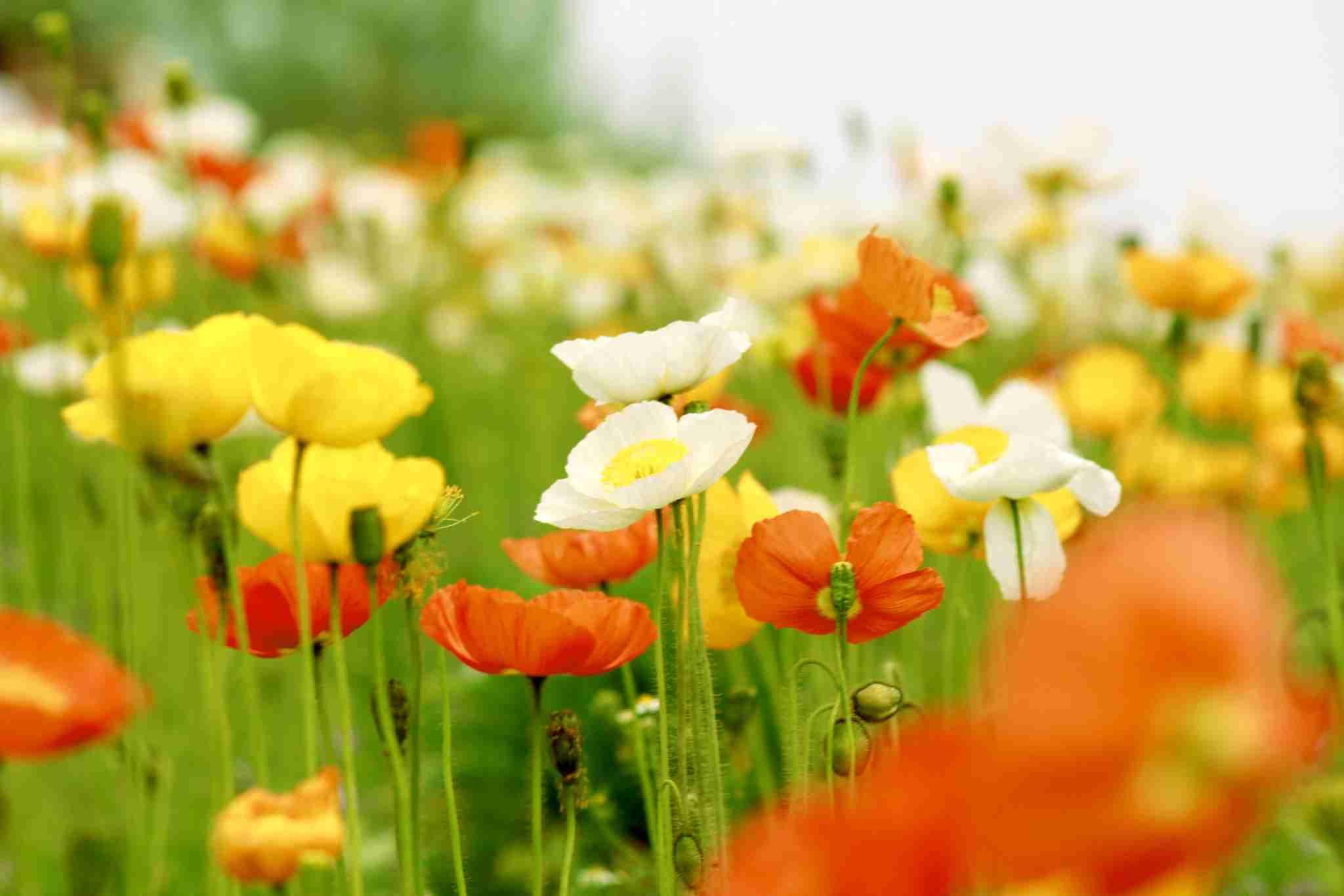 お花畑の画像貼りましょう