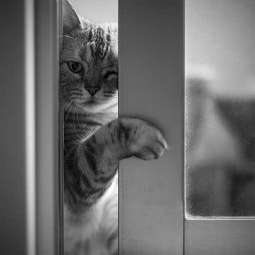 飼い猫  なんでも相談、雑談しよう!