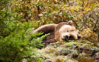 眠そうな動物の画像トピ
