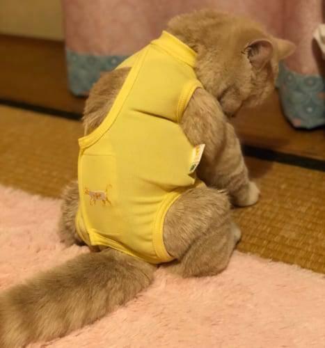 「肉球がトップだと思ってた」猫の好きなパーツで約7割が選んだ部位は?