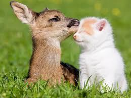 動物占い あなたはどの動物?