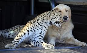 自分のこと可愛いと思ってそうな動物