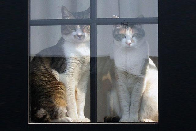 猫の完全室内飼いについて