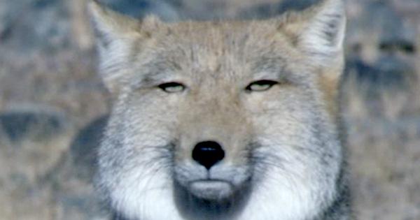 日常生活で思わず顔がチベスナになってしまうこと