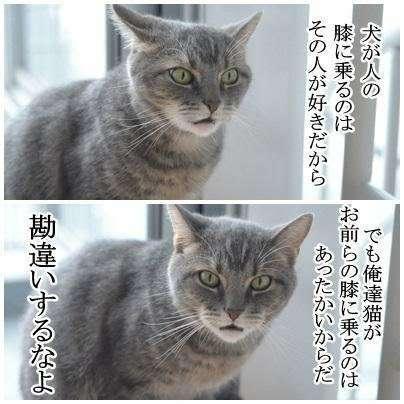 マツコ・デラックス「猫を飼うなら」続く言葉に称賛の声