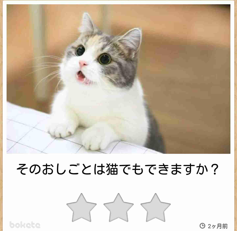 日本猫好きな人