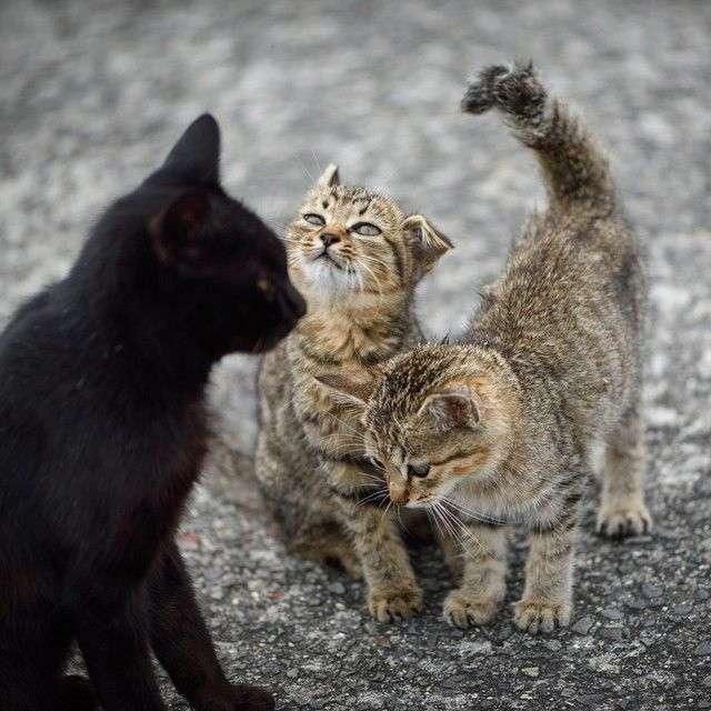 【2月22日】ねこ画像で癒されるトピ【猫の日】