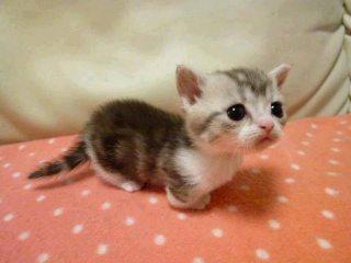 猫を好きになったきっかけは何ですか?