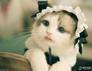 色んな美形な動物達の画像が見たい!