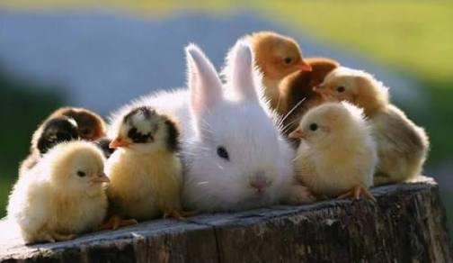 色んなふわふわ動物が見たい!