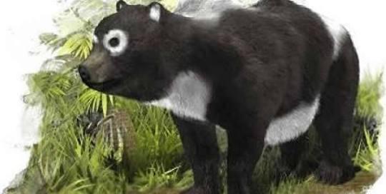 パンダ「百万年の謎」、竹が主食の理由を解明