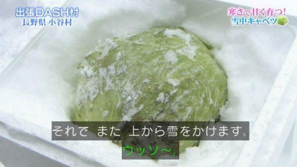 """TOKIO絶賛で売り切れ続出! 芯まで甘い""""雪中キャベツ""""の天ぷらにネット騒然 値段は1玉2,500円"""